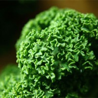 Gekruld boerenkool blad