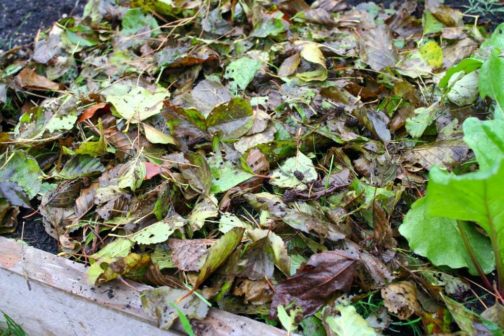 Bladeren als mulchlaag