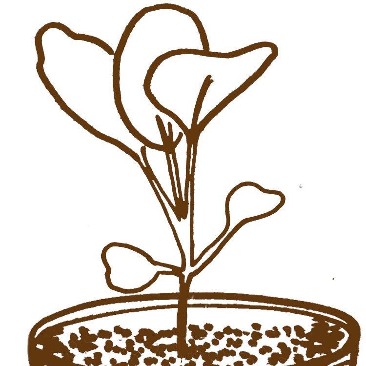 Verspenen groenteplantjes