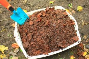 Voeg voor het planten compost toe aan de bodem.