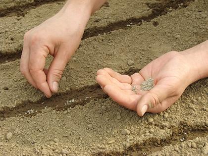 maak de aarde nat voordat je zaait