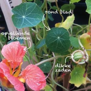 blad bloem zaad oi kers RGB